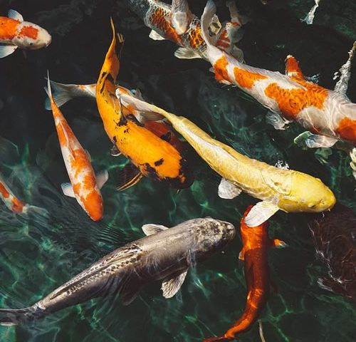 fish_in_water